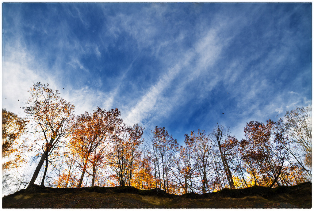 photograph of trees and sky over ridge above Swine Creek in Geauga Country, Ohio
